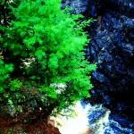 Copper Falls 211