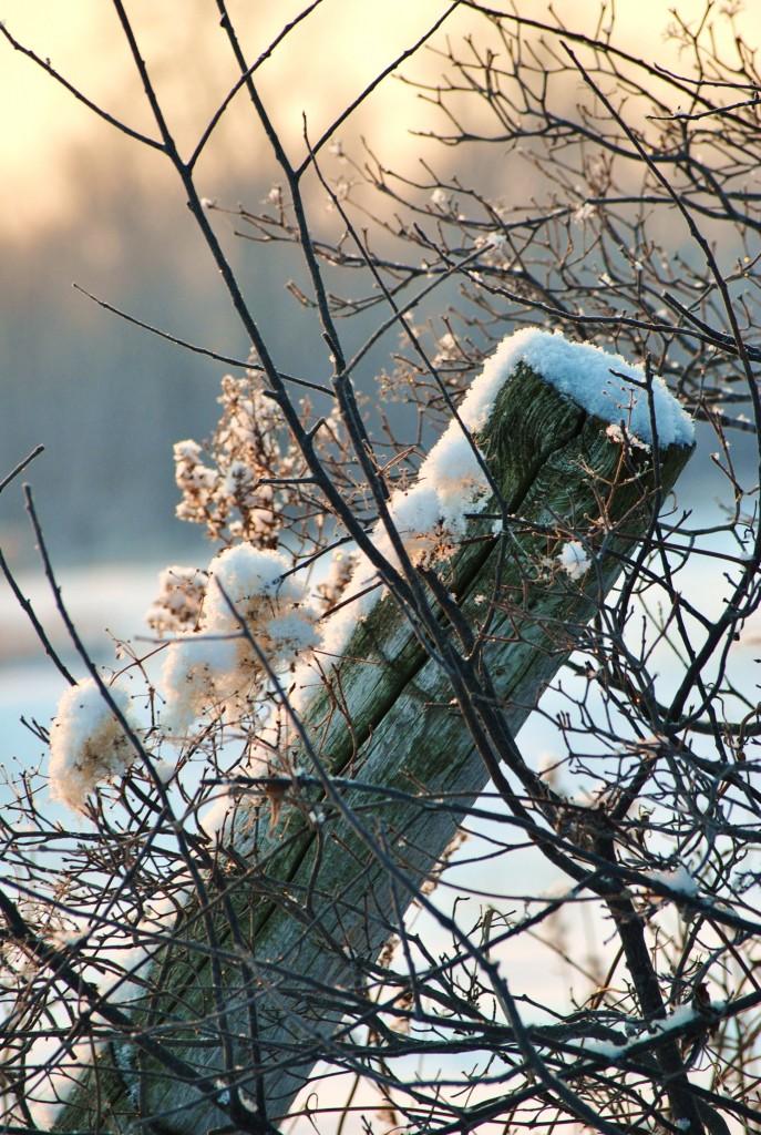Winter 2011 146