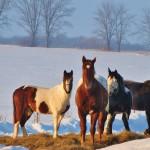 Winter 2011 242